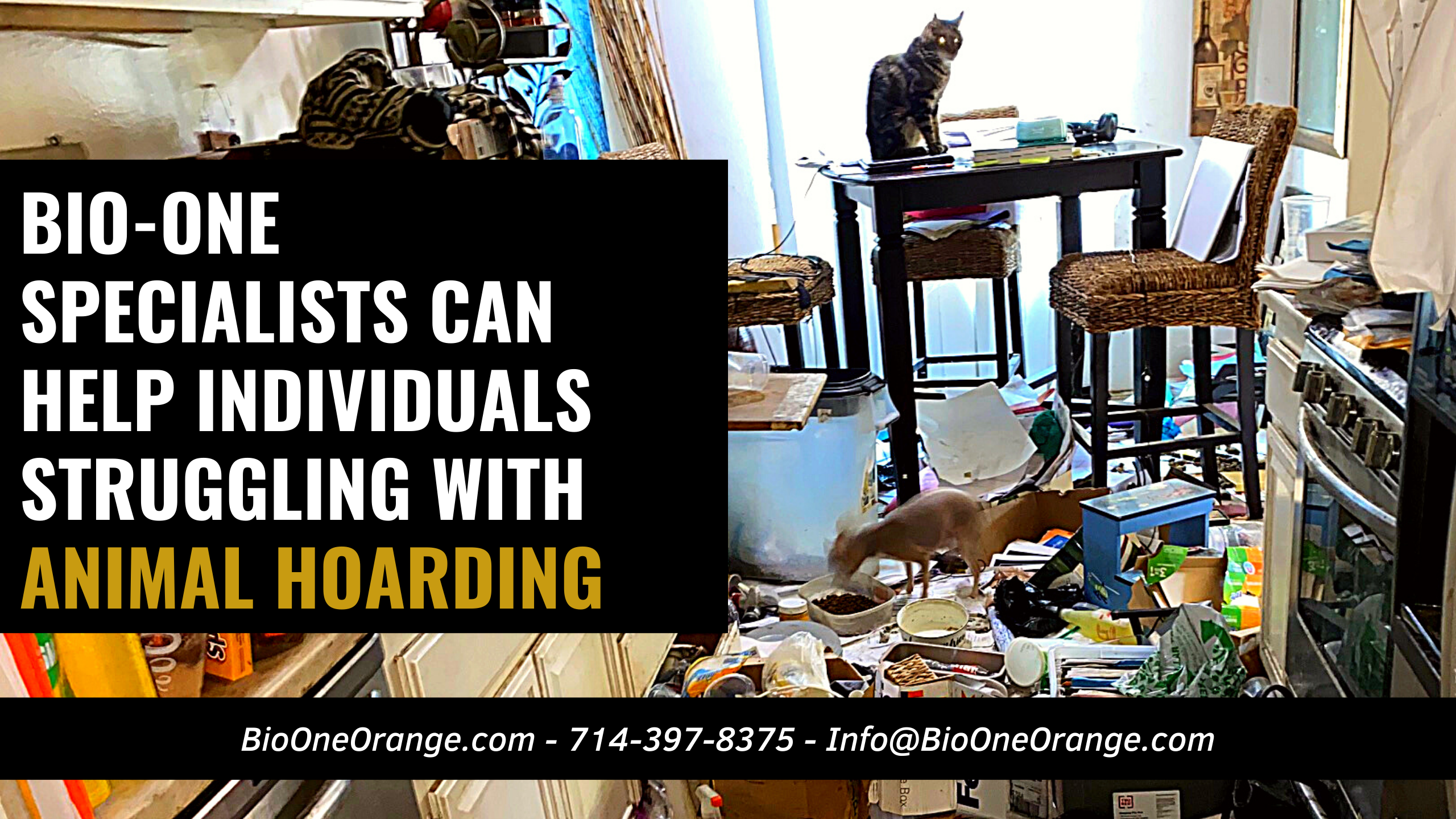 How Bio-One Specialists can help Individuals struggling with Animal Hoarding